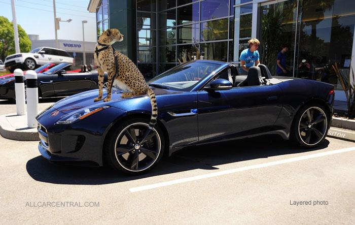 Jaguar F Type 2014